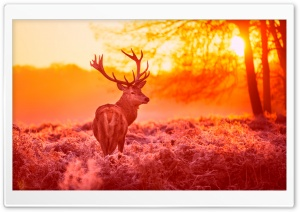 Deer Under The Sunset Warm Forest Grass HD Wide Wallpaper for Widescreen