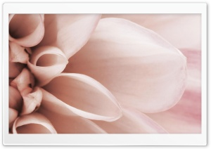 Delicate Petals HD Wide Wallpaper for Widescreen