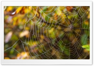 Delicate Spider Web HD Wide Wallpaper for Widescreen