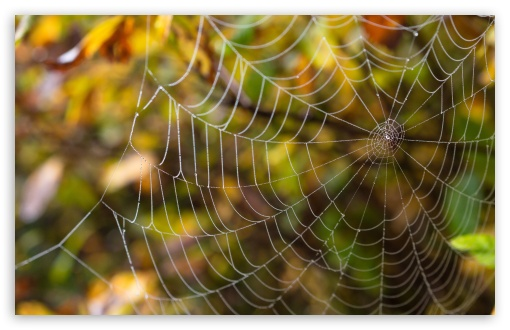 Delicate Spider Web HD wallpaper for Wide 16:10 5:3 Widescreen WHXGA WQXGA WUXGA WXGA WGA ; HD 16:9 High Definition WQHD QWXGA 1080p 900p 720p QHD nHD ; UHD 16:9 WQHD QWXGA 1080p 900p 720p QHD nHD ; Standard 4:3 5:4 3:2 Fullscreen UXGA XGA SVGA QSXGA SXGA DVGA HVGA HQVGA devices ( Apple PowerBook G4 iPhone 4 3G 3GS iPod Touch ) ; iPad 1/2/Mini ; Mobile 4:3 5:3 3:2 16:9 5:4 - UXGA XGA SVGA WGA DVGA HVGA HQVGA devices ( Apple PowerBook G4 iPhone 4 3G 3GS iPod Touch ) WQHD QWXGA 1080p 900p 720p QHD nHD QSXGA SXGA ;