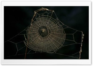 Delicate Spider Web Sneznik Forest Slovenia HD Wide Wallpaper for 4K UHD Widescreen desktop & smartphone