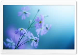 Delicate Violet Flowers HD Wide Wallpaper for Widescreen