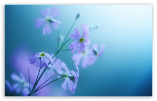 Charming Download Delicate Violet Flowers HD Wallpaper