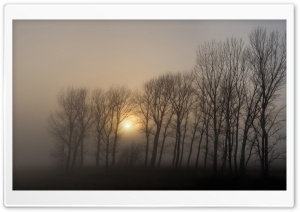 Dense Fog, Morning HD Wide Wallpaper for Widescreen