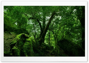 Dense Forest HD Wide Wallpaper for Widescreen