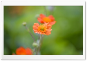 Depth Of Field Photography Orange Flower HD Wide Wallpaper for Widescreen