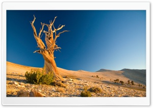 Desert Dead Tree HD Wide Wallpaper for Widescreen