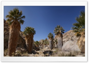 Desert Oasis HD Wide Wallpaper for Widescreen