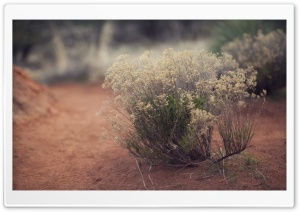 Desert Plants HD Wide Wallpaper for Widescreen