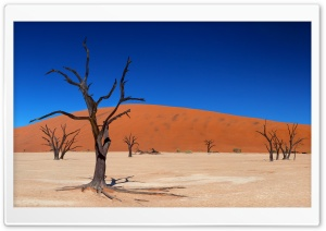 Desert Trees HD Wide Wallpaper for Widescreen