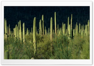 Desert Vegetation 10 HD Wide Wallpaper for Widescreen