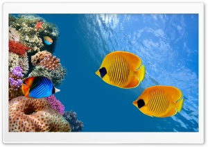 Desktop Aquarium HD Wide Wallpaper for 4K UHD Widescreen desktop & smartphone