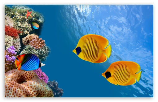 Desktop Aquarium UltraHD Wallpaper for Wide 16:10 5:3 Widescreen WHXGA WQXGA WUXGA WXGA WGA ; 8K UHD TV 16:9 Ultra High Definition 2160p 1440p 1080p 900p 720p ; UHD 16:9 2160p 1440p 1080p 900p 720p ; Standard 4:3 3:2 Fullscreen UXGA XGA SVGA DVGA HVGA HQVGA ( Apple PowerBook G4 iPhone 4 3G 3GS iPod Touch ) ; Tablet 1:1 ; iPad 1/2/Mini ; Mobile 4:3 5:3 3:2 16:9 - UXGA XGA SVGA WGA DVGA HVGA HQVGA ( Apple PowerBook G4 iPhone 4 3G 3GS iPod Touch ) 2160p 1440p 1080p 900p 720p ;