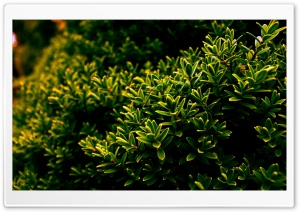 Desktop Bush HD Wide Wallpaper for Widescreen