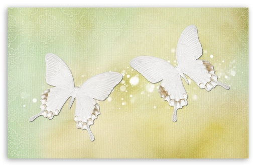 Desktop Butterflies HD wallpaper for Wide 16:10 5:3 Widescreen WHXGA WQXGA WUXGA WXGA WGA ; HD 16:9 High Definition WQHD QWXGA 1080p 900p 720p QHD nHD ; Standard 4:3 3:2 Fullscreen UXGA XGA SVGA DVGA HVGA HQVGA devices ( Apple PowerBook G4 iPhone 4 3G 3GS iPod Touch ) ; iPad 1/2/Mini ; Mobile 4:3 5:3 3:2 16:9 - UXGA XGA SVGA WGA DVGA HVGA HQVGA devices ( Apple PowerBook G4 iPhone 4 3G 3GS iPod Touch ) WQHD QWXGA 1080p 900p 720p QHD nHD ;