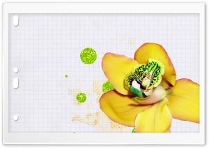 Desktop Orchid Ultra HD Wallpaper for 4K UHD Widescreen desktop, tablet & smartphone