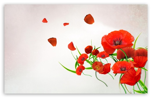 Desktop Poppies ❤ 4K UHD Wallpaper for Wide 16:10 5:3 Widescreen WHXGA WQXGA WUXGA WXGA WGA ; 4K UHD 16:9 Ultra High Definition 2160p 1440p 1080p 900p 720p ; Standard 4:3 5:4 3:2 Fullscreen UXGA XGA SVGA QSXGA SXGA DVGA HVGA HQVGA ( Apple PowerBook G4 iPhone 4 3G 3GS iPod Touch ) ; Tablet 1:1 ; iPad 1/2/Mini ; Mobile 4:3 5:3 3:2 16:9 5:4 - UXGA XGA SVGA WGA DVGA HVGA HQVGA ( Apple PowerBook G4 iPhone 4 3G 3GS iPod Touch ) 2160p 1440p 1080p 900p 720p QSXGA SXGA ;