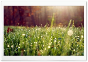Dew HD Wide Wallpaper for Widescreen
