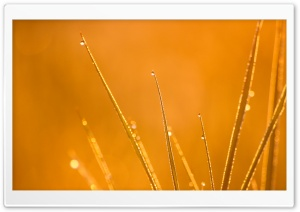 Dew at Sunrise HD Wide Wallpaper for Widescreen