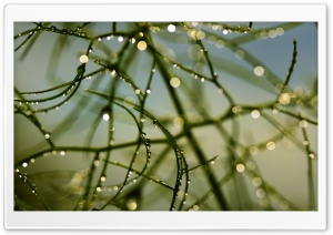 Dew Bokeh HD Wide Wallpaper for Widescreen
