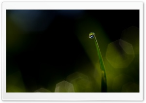 Dew Drop Ultra HD Wallpaper for 4K UHD Widescreen desktop, tablet & smartphone