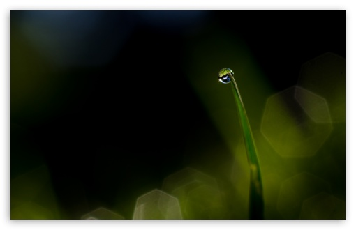Dew Drop ❤ 4K UHD Wallpaper for Wide 16:10 5:3 Widescreen WHXGA WQXGA WUXGA WXGA WGA ; 4K UHD 16:9 Ultra High Definition 2160p 1440p 1080p 900p 720p ; Standard 4:3 5:4 3:2 Fullscreen UXGA XGA SVGA QSXGA SXGA DVGA HVGA HQVGA ( Apple PowerBook G4 iPhone 4 3G 3GS iPod Touch ) ; Smartphone 5:3 WGA ; Tablet 1:1 ; iPad 1/2/Mini ; Mobile 4:3 5:3 3:2 16:9 5:4 - UXGA XGA SVGA WGA DVGA HVGA HQVGA ( Apple PowerBook G4 iPhone 4 3G 3GS iPod Touch ) 2160p 1440p 1080p 900p 720p QSXGA SXGA ;