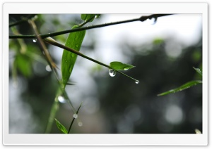 Dew Drop HD Wide Wallpaper for Widescreen