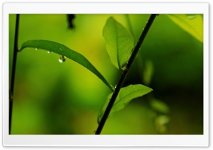 Dew Drops HD Wide Wallpaper for Widescreen