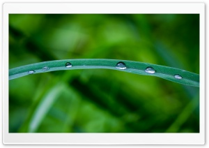 Dew Drops 2 HD Wide Wallpaper for Widescreen