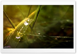 Dew Drops Bokeh HD Wide Wallpaper for Widescreen