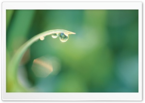 Dew Drops On Grass HD Wide Wallpaper for Widescreen