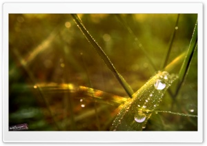 Dew Drops On Grass HD Wide Wallpaper for 4K UHD Widescreen desktop & smartphone