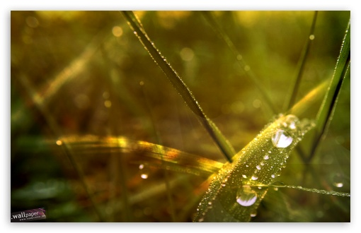Dew Drops On Grass ❤ 4K UHD Wallpaper for Wide 16:10 5:3 Widescreen WHXGA WQXGA WUXGA WXGA WGA ; 4K UHD 16:9 Ultra High Definition 2160p 1440p 1080p 900p 720p ; Standard 3:2 Fullscreen DVGA HVGA HQVGA ( Apple PowerBook G4 iPhone 4 3G 3GS iPod Touch ) ; Mobile 5:3 3:2 16:9 - WGA DVGA HVGA HQVGA ( Apple PowerBook G4 iPhone 4 3G 3GS iPod Touch ) 2160p 1440p 1080p 900p 720p ; Dual 16:10 5:3 16:9 4:3 5:4 WHXGA WQXGA WUXGA WXGA WGA 2160p 1440p 1080p 900p 720p UXGA XGA SVGA QSXGA SXGA ;
