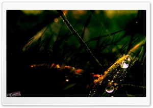 Dew Drops On Grass (Dark) HD Wide Wallpaper for 4K UHD Widescreen desktop & smartphone