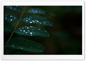 Dew On Dark Green Leaves HD Wide Wallpaper for Widescreen