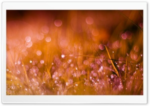 Dew On Grass HD Wide Wallpaper for Widescreen