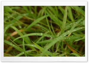 Dew On Grass HD Wide Wallpaper for 4K UHD Widescreen desktop & smartphone