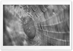 Dew On Spider Web Macro HD Wide Wallpaper for Widescreen