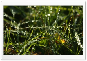 Dewdrop HD Wide Wallpaper for Widescreen