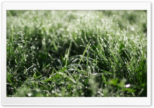 Dewdrops Grass HD Wide Wallpaper for Widescreen