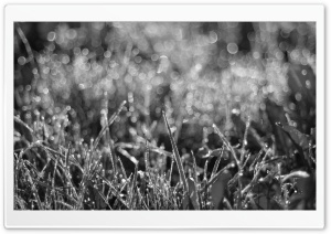 Dewdrops Grass III HD Wide Wallpaper for Widescreen