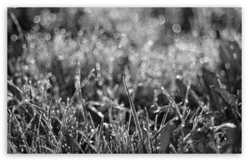 Dewdrops Grass III ❤ 4K UHD Wallpaper for Wide 16:10 5:3 Widescreen WHXGA WQXGA WUXGA WXGA WGA ; 4K UHD 16:9 Ultra High Definition 2160p 1440p 1080p 900p 720p ; Standard 4:3 5:4 3:2 Fullscreen UXGA XGA SVGA QSXGA SXGA DVGA HVGA HQVGA ( Apple PowerBook G4 iPhone 4 3G 3GS iPod Touch ) ; Tablet 1:1 ; iPad 1/2/Mini ; Mobile 4:3 5:3 3:2 16:9 5:4 - UXGA XGA SVGA WGA DVGA HVGA HQVGA ( Apple PowerBook G4 iPhone 4 3G 3GS iPod Touch ) 2160p 1440p 1080p 900p 720p QSXGA SXGA ;