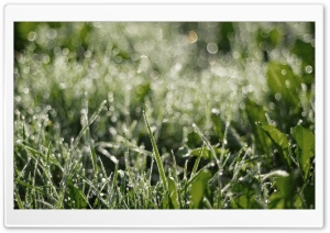 Dewdrops Grass ll HD Wide Wallpaper for Widescreen