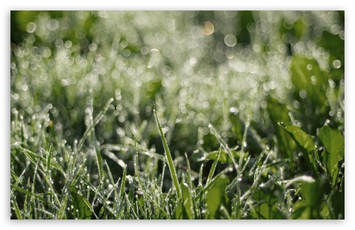 Dewdrops Grass ll ❤ 4K UHD Wallpaper for Wide 16:10 5:3 Widescreen WHXGA WQXGA WUXGA WXGA WGA ; 4K UHD 16:9 Ultra High Definition 2160p 1440p 1080p 900p 720p ; Standard 4:3 5:4 3:2 Fullscreen UXGA XGA SVGA QSXGA SXGA DVGA HVGA HQVGA ( Apple PowerBook G4 iPhone 4 3G 3GS iPod Touch ) ; Tablet 1:1 ; iPad 1/2/Mini ; Mobile 4:3 5:3 3:2 16:9 5:4 - UXGA XGA SVGA WGA DVGA HVGA HQVGA ( Apple PowerBook G4 iPhone 4 3G 3GS iPod Touch ) 2160p 1440p 1080p 900p 720p QSXGA SXGA ;