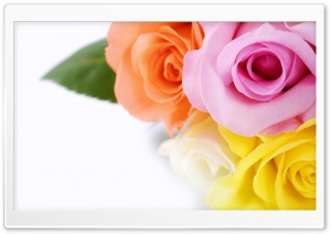 Different Colours Roses HD Wide Wallpaper for Widescreen