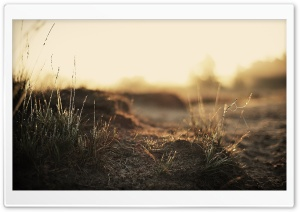 Dirt And Wet Grass HD Wide Wallpaper for Widescreen