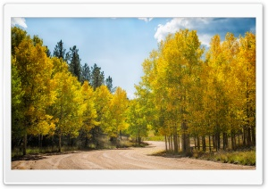 Dirt Road Aspens HD Wide Wallpaper for 4K UHD Widescreen desktop & smartphone