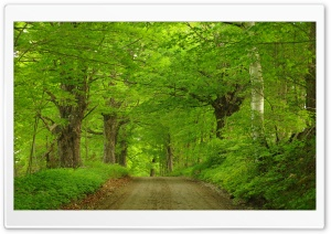 Dirt Road Through Forest HD Wide Wallpaper for Widescreen
