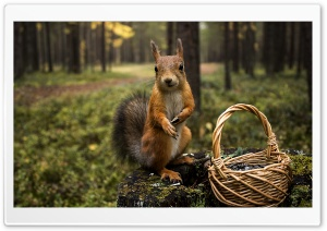 Do You Want Some Acorns HD Wide Wallpaper for Widescreen