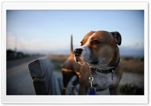 Dog HD Wide Wallpaper for Widescreen